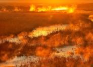 激情燃烧的湿地