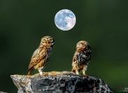 月圆之夜【祝贺荣获首页创意精华】