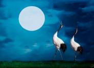 月光奏鸣曲---(恭贺首页精华)