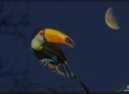 创意 巨嘴望月(祝贺荣获创意精华)