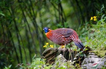 徜徉在绿林中~~~贺图获《首页鸟类精华》