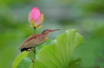 荷塘花鸟(祝贺老师荣获首页精华)