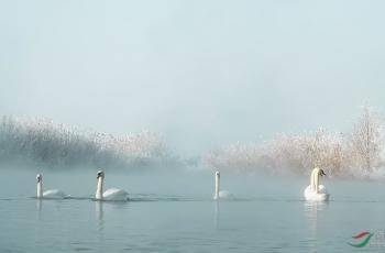美丽的天鹅湖!