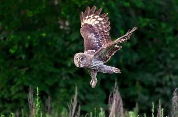 乌林鴞(祝贺获首页精华)