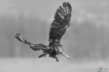 《飞猫 · 黑猫》 ·  新周问好!!------祝贺荣获首页黑白影像精华!