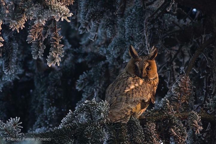 2013年度野生动物摄影大赛获奖作品集