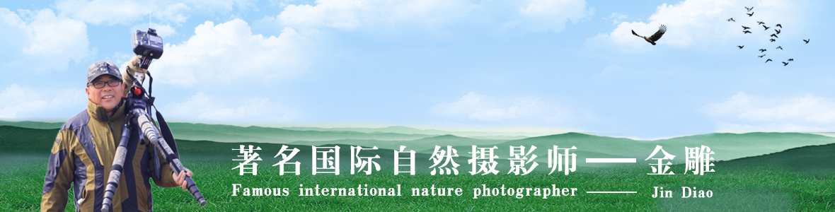 004【国际自然摄影师】金雕@:结缘鸟网,携手圆梦