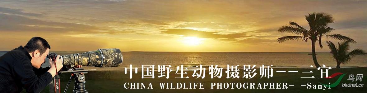 020【中国生态摄影师】三宜:靡不有初,鲜克有终