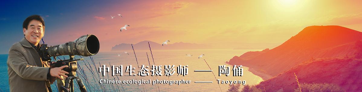 032【中国生态摄影师】陶俑:追寻自然环境里的飞羽精灵