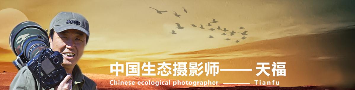 018【中国生态摄影师】天福:回顾野鸟摄影十三年,与鸟网同龄