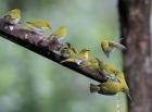 行摄日志:鸟之情