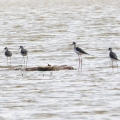 青华海国家湿地公园