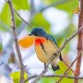 澳門鳥類_2016