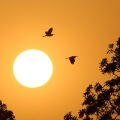 夕阳西下 倦鸟归林