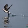 庄河记忆----拍海鸟