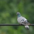 滹沱河畔的野生鸟