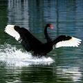 五、鸟类的沟通与交流