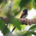 澳門鳥類_2017