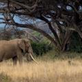 2018.11.13非洲大象