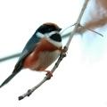 潍坊滨海拍鸟