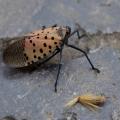 我的相册-昆虫