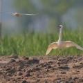 中国鸟类百科
