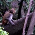 树上一只猴子