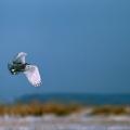 我的相册---小林鸟