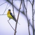 乌梁素海观鸟