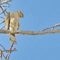 树上一只鸟