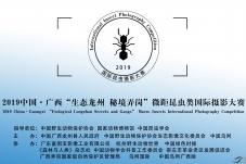 """中国·广西""""生态龙州 秘境弄岗"""" 微距"""