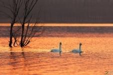 静静的天鹅湖