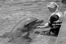 海豚与女孩