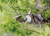 傻老头-张根震:鸟类同人类一些做法为何如此相似