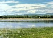 余承奇:【阿勒泰的湿地】