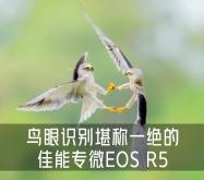 画质细腻专业操控 鸟眼识别堪称一绝的佳能