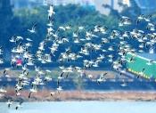 紫光鳥影:清平樂【觀鳥】