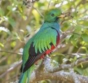 2019~2020年度哥斯达黎加拍鸟活动