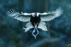 鹇鸟翔飞,同庆双节。