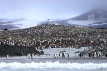 快乐的南极企鹅19
