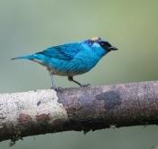 2019年国庆节 厄瓜多尔拍鸟活动12天