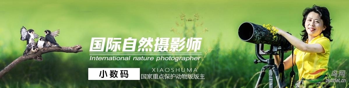 034【国际自然摄影师】小数码: 我为鸟儿代