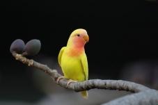 靓丽的鹦鹉