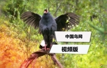 鸟网视频版欢迎您!