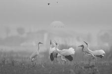 早安中国鸟网黑白影像版