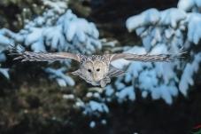 一只大鸟出山林