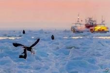 冰海晨曦——起航