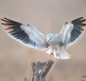 12月12日石家庄鸟类拍摄活动