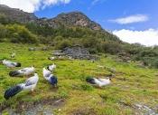 """江邊一只鳥:高原上的""""向陽之地"""""""