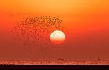 """""""鸟浪""""-与日争辉"""
